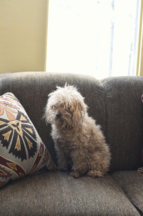 Pup face - De quelle planète es-tu