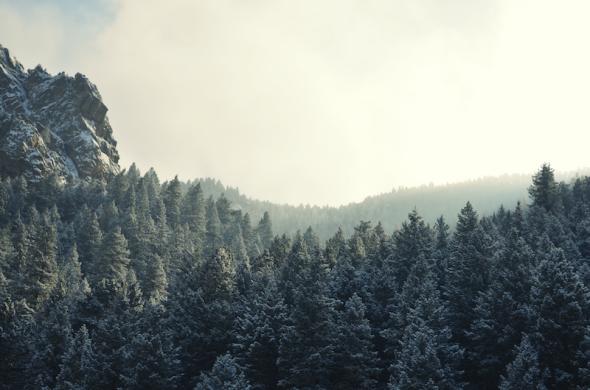 Woodsy Views - De quelle planète es-u? 4